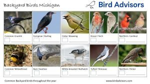 Backyard Birds Identification Worksheet Michigan Page 2