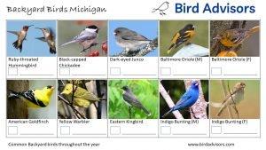 Backyard Birds Identification Worksheet Michigan Page 3