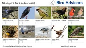 Backyard Birds Identification Worksheet Minnesota Page 2