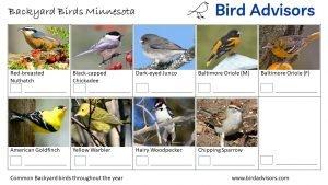 Backyard Birds Identification Worksheet Minnesota Page 3