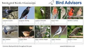 Backyard Birds Identification Worksheet Mississippi Page 2