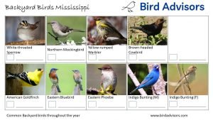 Backyard Birds Identification Worksheet Mississippi Page 3