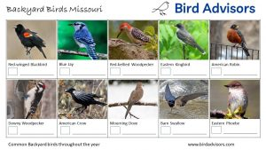 Do you need help with bird identification in Maryland for birds that visit your backyard? Get ID information, pictures and printable worksheets to help with these birds of Maryland identification. There is a great joy in putting up bird feeders and watching what comes to visit but it gets better if you know who they are and learn to identify birds in your backyard. Well, now you can find out what are the most common birds in Maryland that visit feeders or hop across your lawn. So if you're ready to do some backyard birding then read on to find out how to identify birds in Maryland and how to attract more birds to your yard. Also get free bird printables of backyard birds of Maryland with pictures to help you with Maryland bird identification and to keep track of the birds that visit your backyard.
