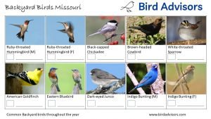 Backyard Birds Identification Worksheet Missouri Page 3