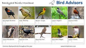 Backyard Birds Identification Worksheet Montana Page 1