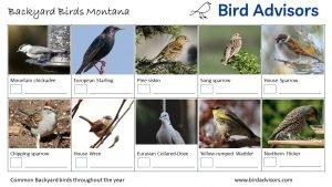 Backyard Birds Identification Worksheet Montana Page 2