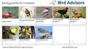 Backyard Birds Identification Worksheet Montana Page 3