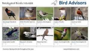 Backyard Birds Identification Worksheet Nevada Page 1