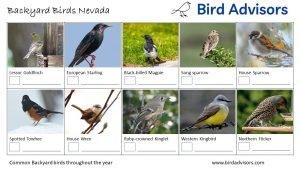 Backyard Birds Identification Worksheet Nevada Page 2