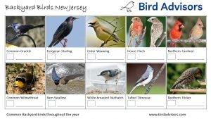 Backyard Birds Identification Worksheet New Jersey Page 2