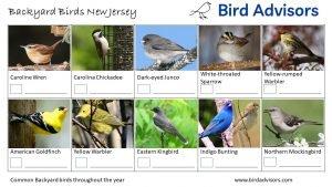 Backyard Birds Identification Worksheet New Jersey Page 3