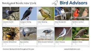 Backyard Birds Identification Worksheet New York Page 2