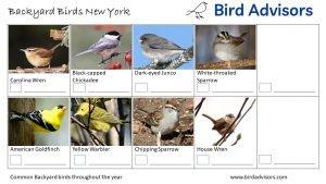 Backyard Birds Identification Worksheet New York Page 3