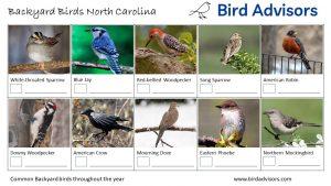 Backyard Birds Identification Worksheet North Carolina Page 1