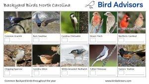 Backyard Birds Identification Worksheet North Carolina Page 2