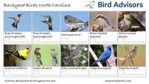 Backyard Birds Identification Worksheet North Carolina Page 3