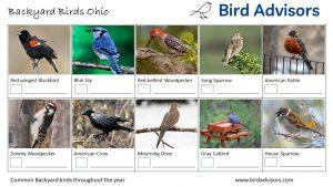Backyard Birds Identification Worksheet Ohio Page 1