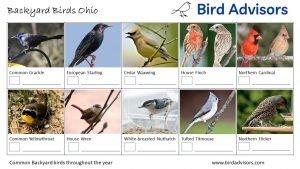 Backyard Birds Identification Worksheet Ohio Page 2