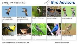 Backyard Birds Identification Worksheet Ohio Page 3