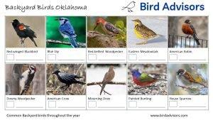 Backyard Birds Identification Worksheet Oklahoma Page 1