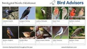 Backyard Birds Identification Worksheet Oklahoma Page 2