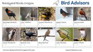 Backyard Birds Identification Worksheet Oregon Page 1