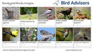Backyard Birds Identification Worksheet Oregon Page 3
