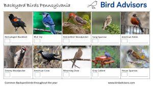 Backyard Birds Identification Worksheet Pennsylvania Page 1