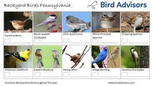 Backyard Birds Identification Worksheet Pennsylvania Page 3