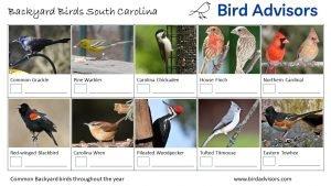 Backyard Birds Identification Worksheet South Carolina Page 2