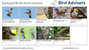 Backyard Birds Identification Worksheet South Carolina Page 3
