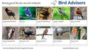 Backyard Birds Identification Worksheet South Dakota Page 1