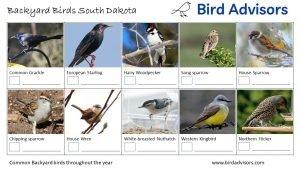 Backyard Birds Identification Worksheet South Dakota Page 2