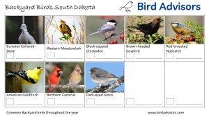 Backyard Birds Identification Worksheet South Dakota Page 3