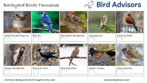 Backyard Birds Identification Worksheet Tennessee Page 1