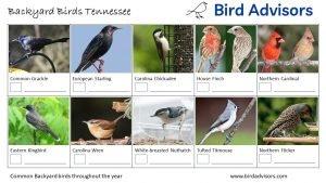 Backyard Birds Identification Worksheet Tennessee Page 2