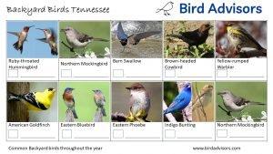 Backyard Birds Identification Worksheet Tennessee Page 3