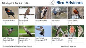 Backyard Birds Identification Worksheet Utah Page 1
