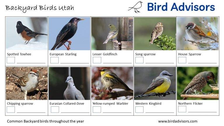 Backyard Birds Identification Worksheet Utah Page 2