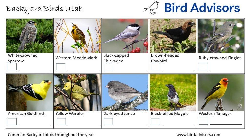 Backyard Birds Identification Worksheet Utah Page 3