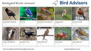 Backyard Birds Identification Worksheet Vermont Page 1