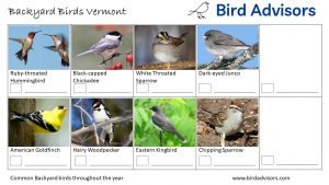 Backyard Birds Identification Worksheet Vermont Page 3
