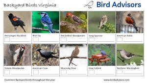 Backyard Birds Identification Worksheet Virginia Page 1