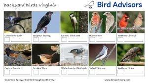 Backyard Birds Identification Worksheet Virginia Page 2