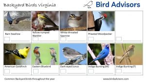Backyard Birds Identification Worksheet Virginia Page 3