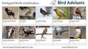 Backyard Birds Identification Worksheet Washington Page 1