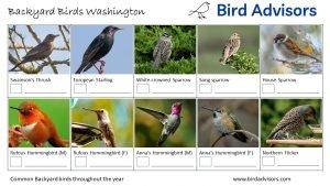 Backyard Birds Identification Worksheet Washington Page 2