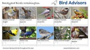 Backyard Birds Identification Worksheet Washington Page 3