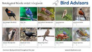 Backyard Birds Identification Worksheet West Virginia Page 1