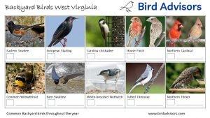Backyard Birds Identification Worksheet West Virginia Page 2